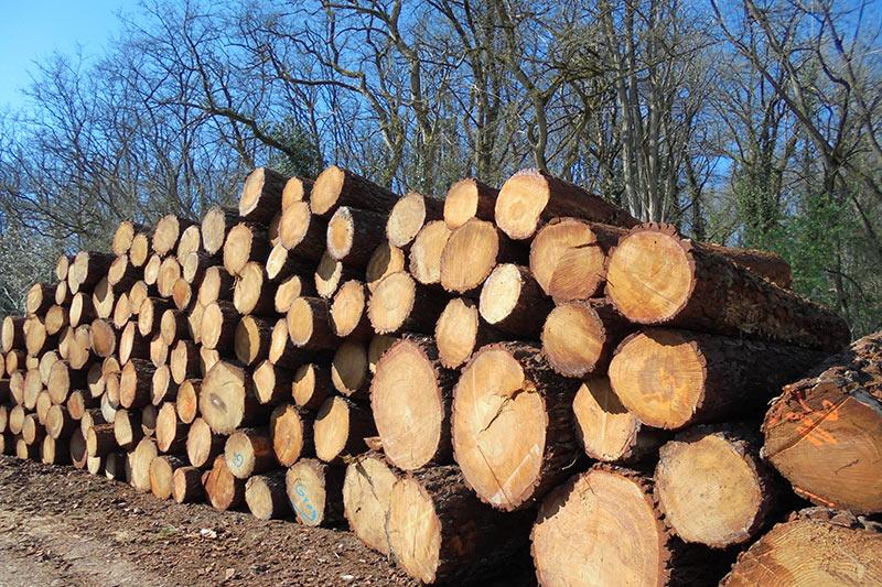 découpe de bois à la scierie Labattut, forêt,Neuvis, Dordogne